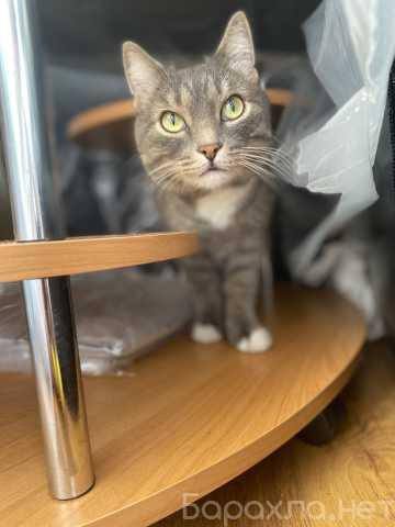 Продам: Найдена кошка