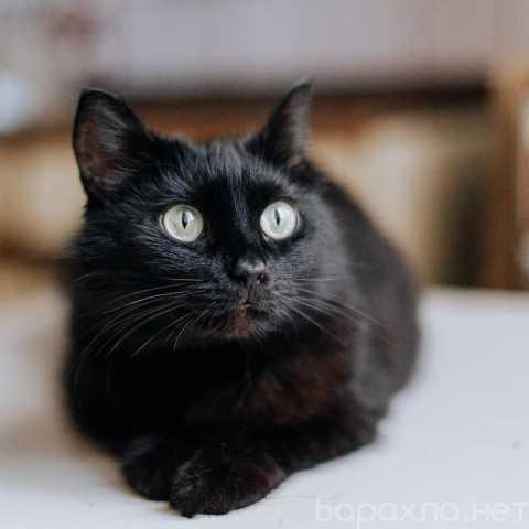 Отдам даром: Яркая личность кошечка Шаня ищет дом
