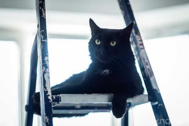 Отдам даром: Молодой, грациозный и ласковый кот Шварц