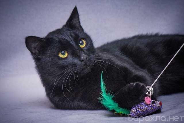 Отдам даром: Грустная красавица Мила. Кошка в добрые