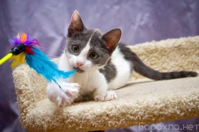 Отдам даром: Великолепная котенок Куколка – прекрасна