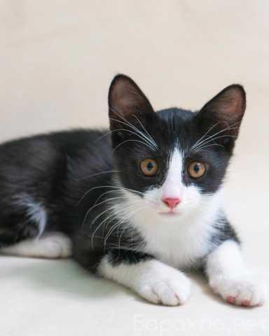 Отдам даром: Котёнок Рикки ищет дом!