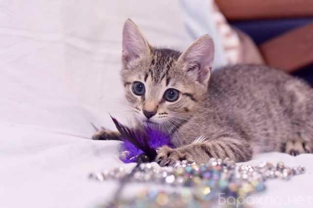 Отдам даром: Котенок Маруся в добрые руки
