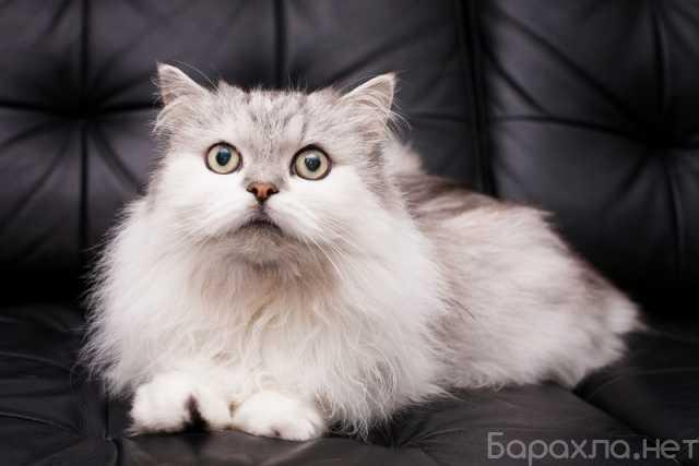 Отдам даром: Котик Бонифаций в поисках самых лучших м