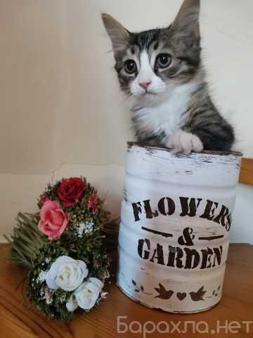 Отдам даром: Котята Вайт и Мия в дар