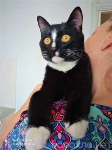 Отдам даром: Котенок Кевин в смокинге
