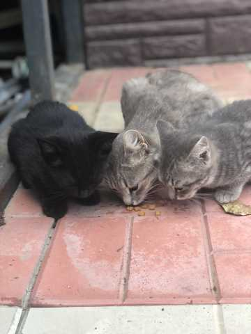 Отдам даром: Спасите котёнка, чёрный прекрасный малыш