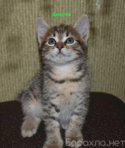 Отдам даром: Котят в добрые руки
