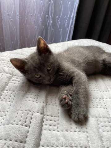 Продам: Котёнка