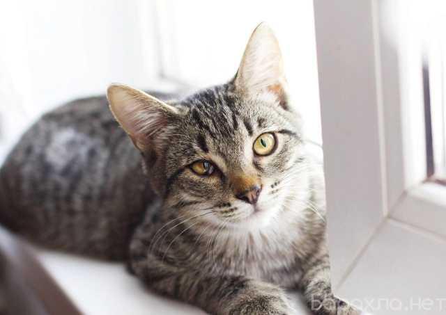 Отдам даром: Амур-активный, ласковый котик