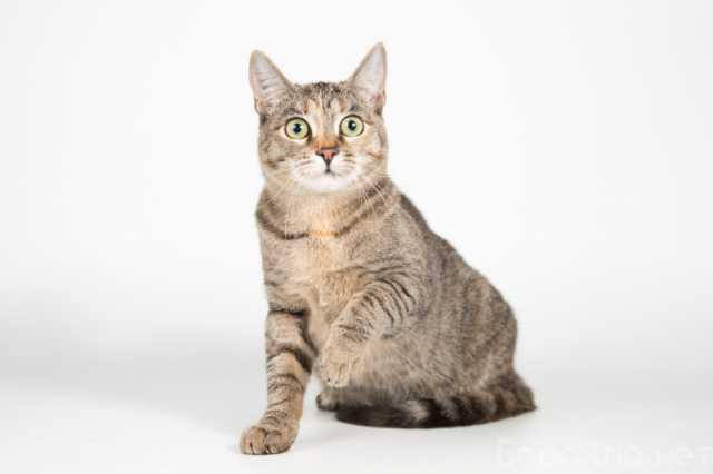 Отдам даром: Нежная маленькая кошечка Сесилия