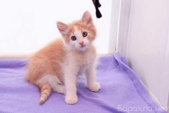 Отдам даром: Ласковые пушистки котята в дар