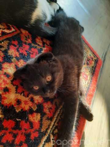 Отдам даром: Котята и кошки ищут дом
