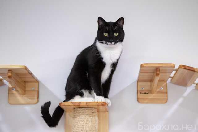 Отдам даром: Шикарный кот Джимми