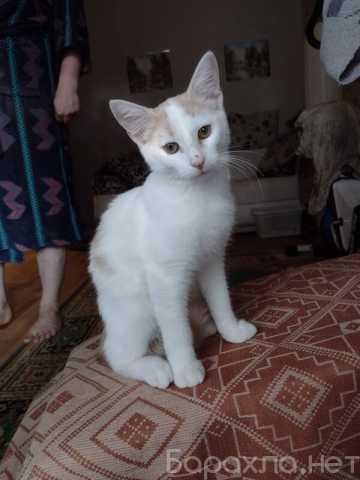 Отдам даром: Бело-рыжий котик Персик в дар