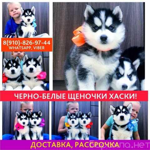 Продам: сибирские хаски на продажу )))
