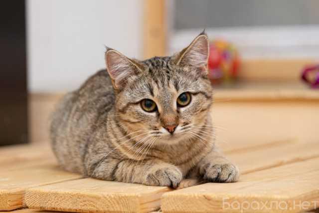 Отдам даром: Москва! Кошечка Принцесса ищет дом!