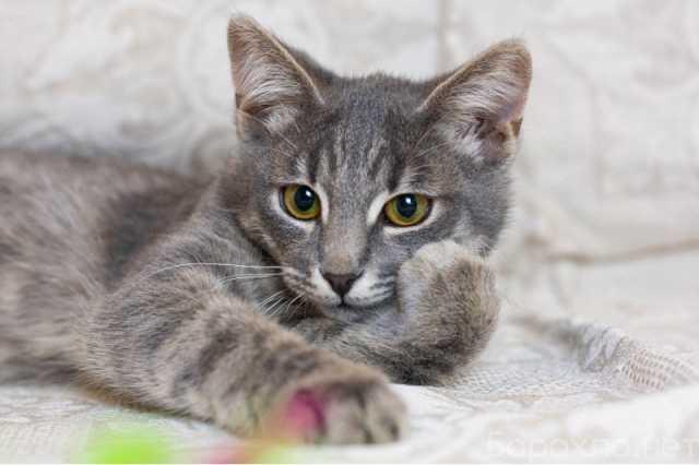 Отдам даром: очаровательный котенок Джеймс ищет семью