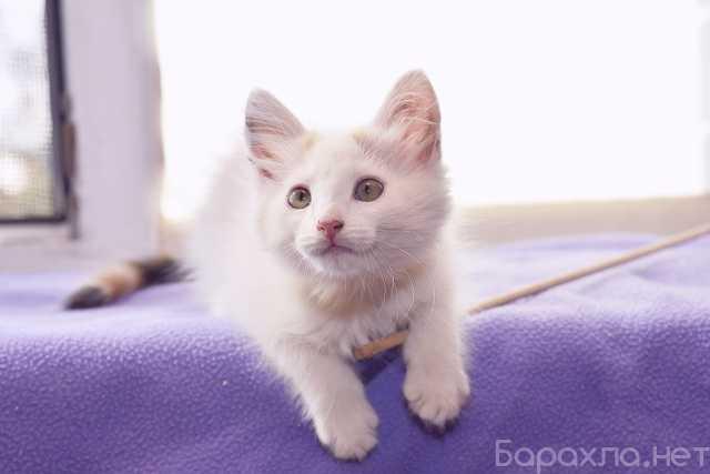 Отдам даром: Котенок Ромашка в дар