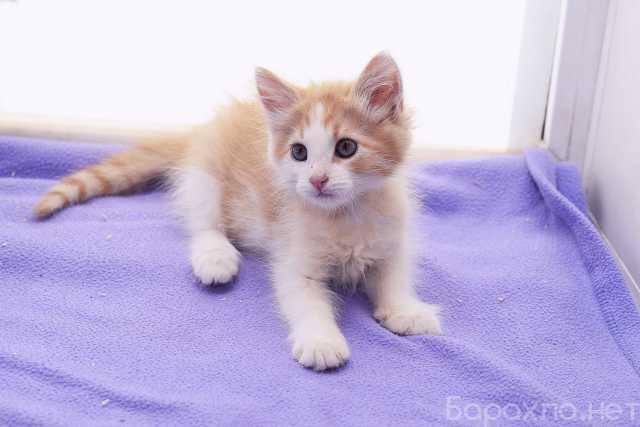 Отдам даром: Котенок Лютик в дар