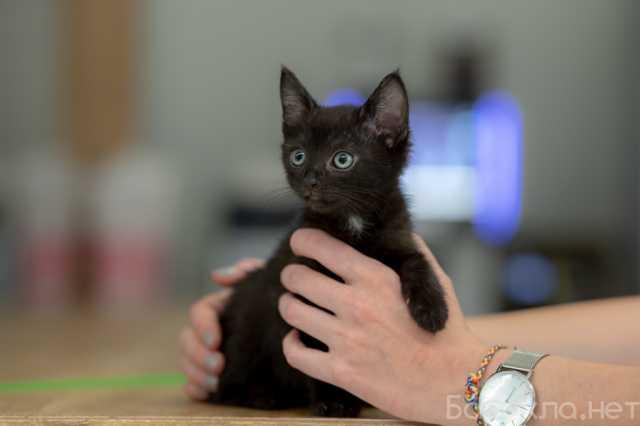 Отдам даром: Очаровательные пушистики котята ищут дом