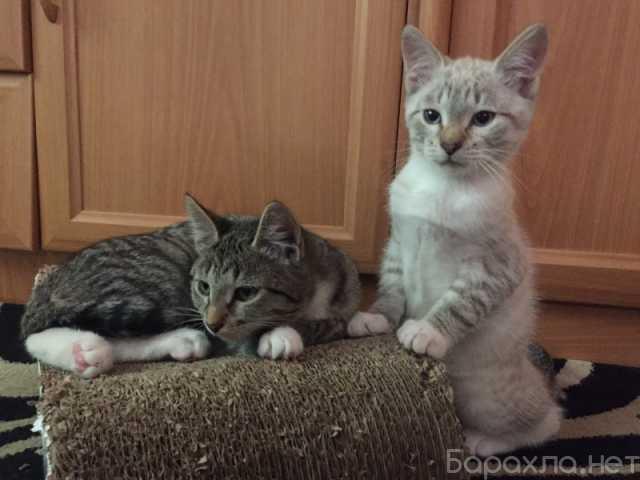 Отдам даром: Отдам в ответственные и добрые руки котя