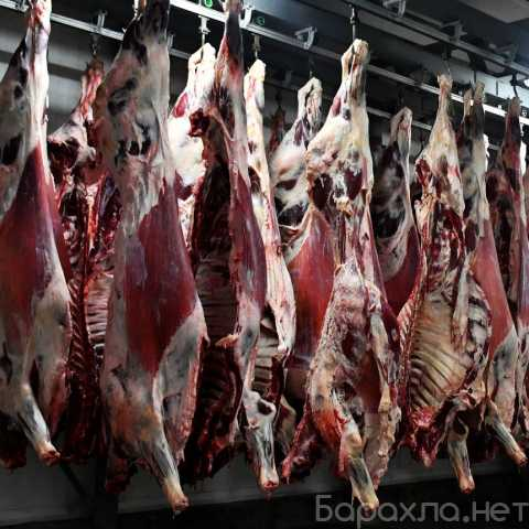 Продам: Говядина, свинина, мясо ЦБ, отгрузка в р