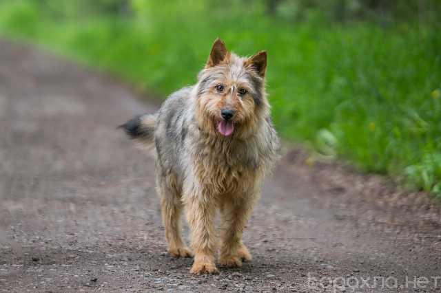 Отдам даром: Ласковый пес Добрыня в дар