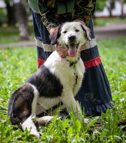 Отдам даром: Собачка Тюлитта в дар
