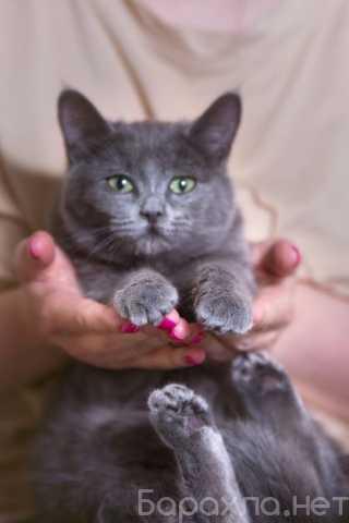 Отдам даром: Котенок Ева в дар