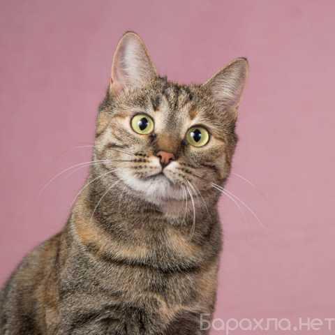 Отдам даром: Кошка Стася – мисс Грациозность