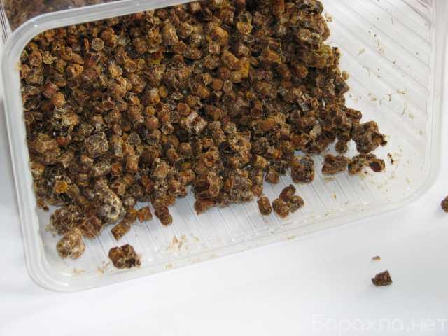 Продам: Перга пчелиная