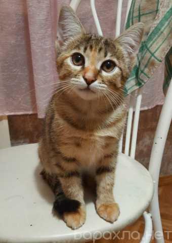 Продам: Отдам котенка