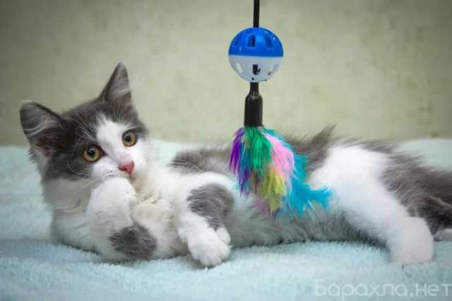Отдам даром: Чудесный котенок в добрые руки