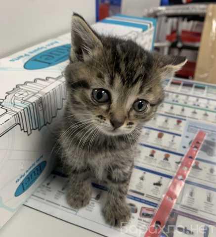 Отдам даром: Котят в хорошие руки