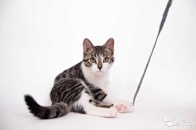 Отдам даром: Котёнок Фунтик