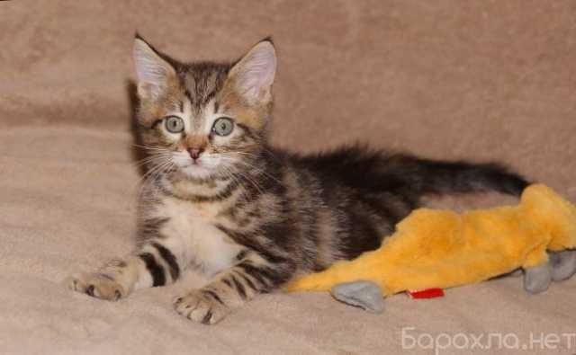 Отдам даром: Котенок Руби в дар