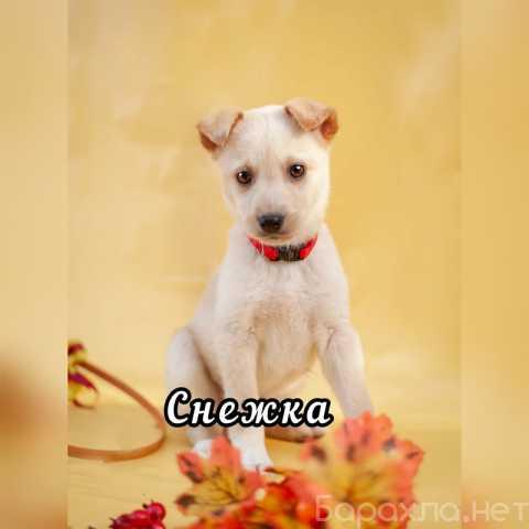 Отдам даром: Красивые щенки в дар