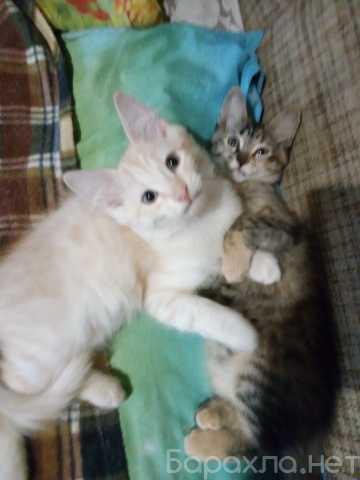 Отдам даром: котята от домашней кошки